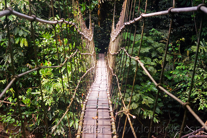 monkey bridge, cables, gunung mulu national park, jungle, knots, lumber, melinau river, pedestrian bridge, plants, rain forest, ropes, sungai melinau, suspension bridge, trees, trekking, vanishing point, water