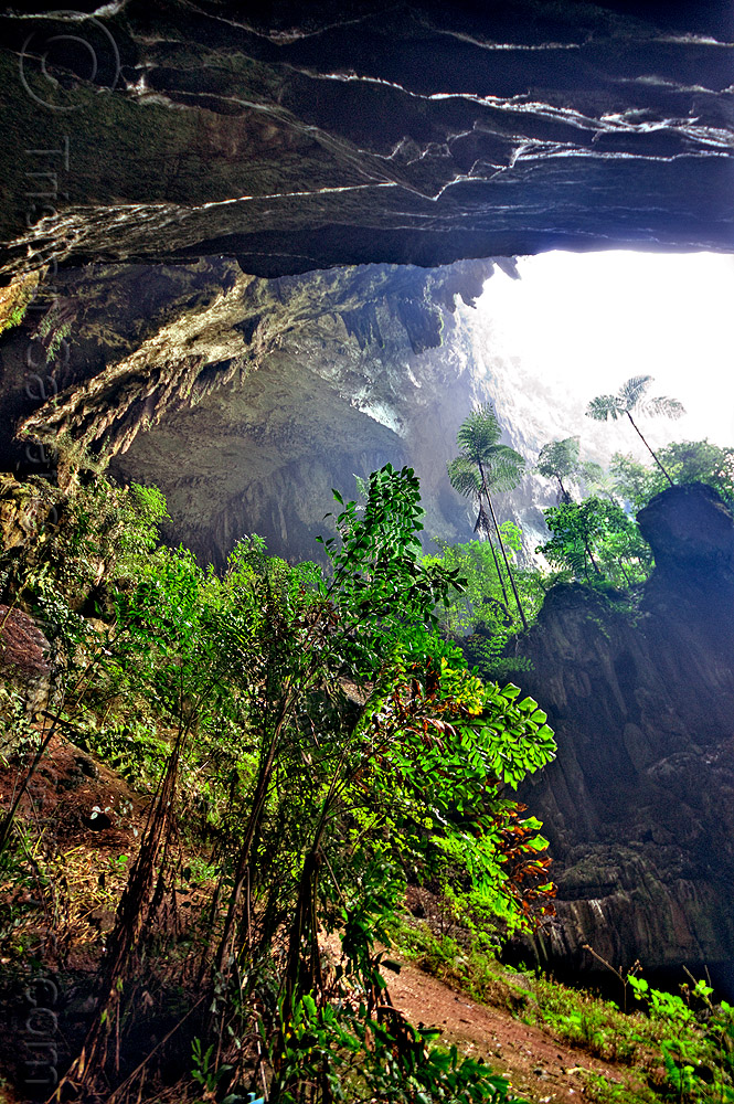 the mouth of deer cave - mulu (borneo), backlight, cave mouth, caving, ferns, forest, gunung mulu, gunung mulu national park, jungle, natural cave, rain forest, spelunking, trees