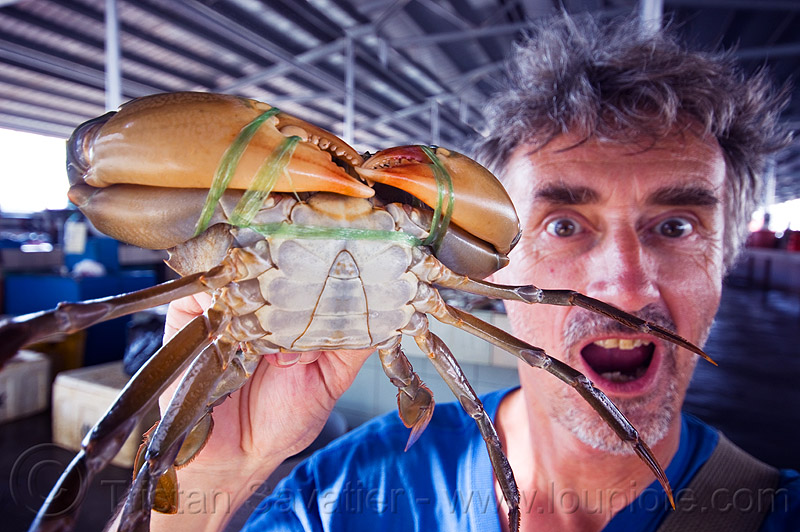 mud crab with big claws, claws, fish market, food, legs, man, mangrove crab, mud crab, portunidae, scylla crab, seafood, self portrait, selfie, swimmer crab, tristan savatier