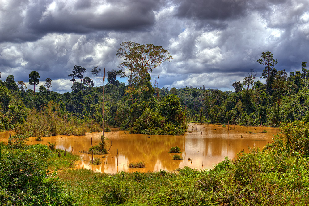 muddy water, clouds, cloudy sky, jungle, lake, muddy, pond, rain forest, water