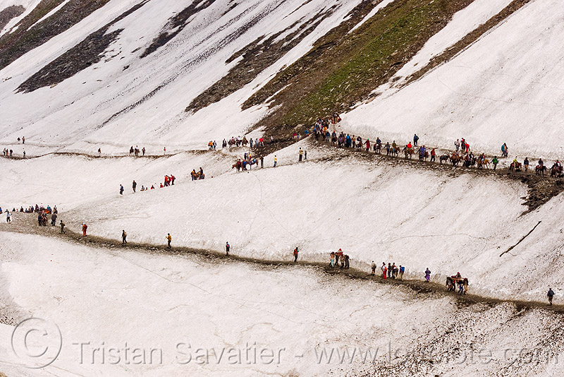 mules and pilgrims on the trail - amarnath yatra (pilgrimage) - kashmir, amarnath yatra, glacier, hiking, hindu pilgrimage, india, kashmir, mountain trail, mountains, pilgrims, snow, trekking