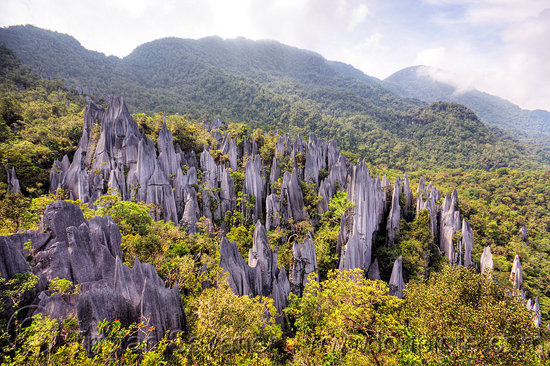 mulu pinnacles (borneo), erosion, geology, gunung mulu national park, jungle, karst, karstic, limestone, rain forest, rock, stone