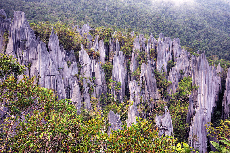 mulu pinnacles (borneo), erosion, geology, gunung mulu, gunung mulu national park, jungle, karst, karstic, limestone, rain forest, rock, stone