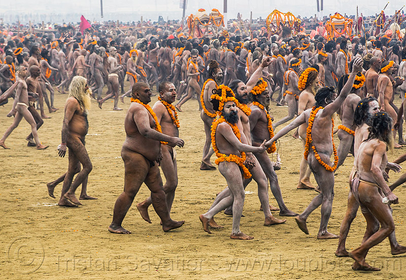naga babas procession - kumbh mela 2013 hindu festival (india), crowd, flower necklaces, hindu, hinduism, holy ash, kumbha mela, maha kumbh mela, marigold flowers, men, naga babas, naga sadhus, naked, orange flowers, procession, sacred ash, sadhu, triveni sangam, vasant panchami snan, vibhuti, walking
