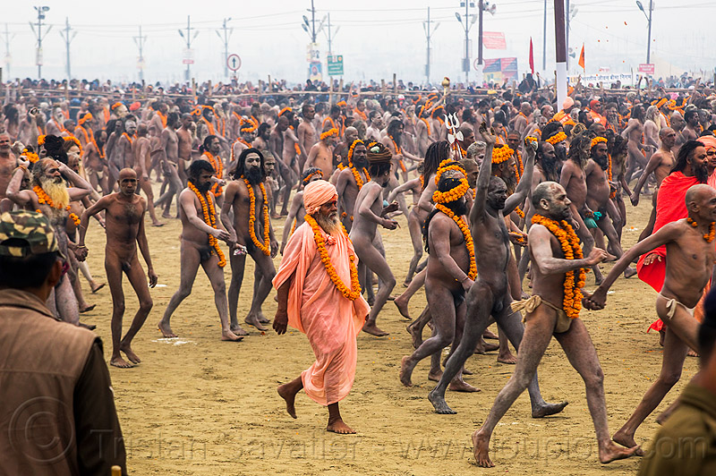 naga (naked) babas procession - kumbh mela hindu festival (india), crowd, flower necklaces, hindu, hinduism, holy ash, kumbha mela, maha kumbh mela, marigold flowers, men, naga babas, naga sadhus, naked, orange flowers, procession, sacred ash, sadhu, triveni sangam, vasant panchami snan, vibhuti, walking