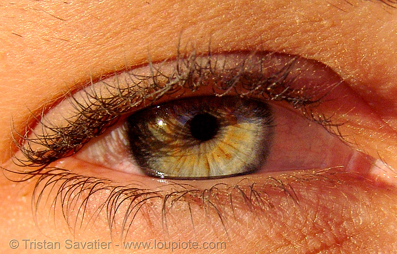 natalie's eye, close up, eye color, eyelashes, hazel, iris, macro, people, pupil, right eye, woman
