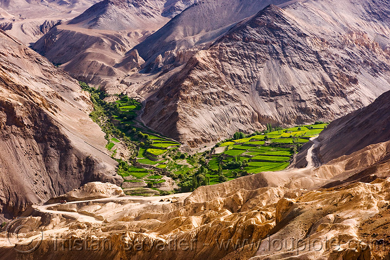 near lamayuru - leh to srinagar road - ladakh (india), agriculture, mountains, patch, rice paddy fields, terrace farming, terraces, valley
