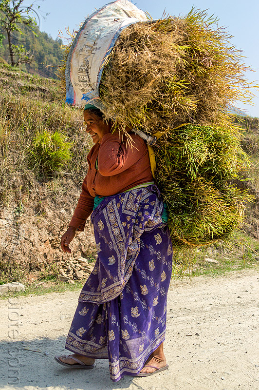 nepali woman carrying bundle of hay (nepal), grass, people, walking