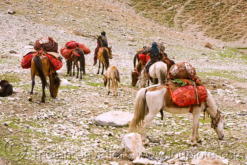 nomads with horses - drass valley - leh to srinagar road - kashmir, caravan, dras valley, drass valley, horse riding, horseback riding, india, kashmir, kashmiri gujjars, mountains, muslim, nomads, pack animal, pack horses, road, zoji la, zoji pass, zojila pass