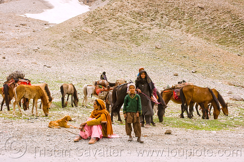 nomads with horses - leh to srinagar road - kashmir, caravan, dras valley, drass valley, india, kashmir, kashmiri gujjars, mountains, muslim, nomads, pack animal, pack horses, road, zoji la, zoji pass, zojila pass