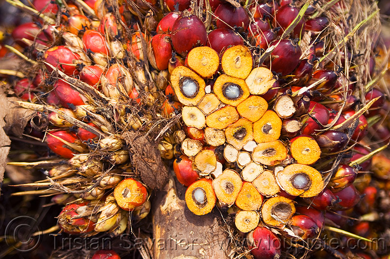 oil palm fruit, african oil palm, agroindustry, bunches, cut, elaeis guineensis, oil palm fruit, palm kernel oil, section, tenera