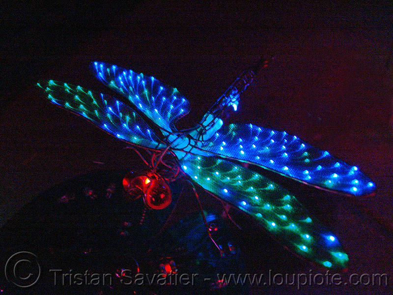 optical fiber dragonfly by jeremy lutes - lily pond, art, fiber optic, fire arts festival, glowing, optic fiber, optical fibre, the crucible