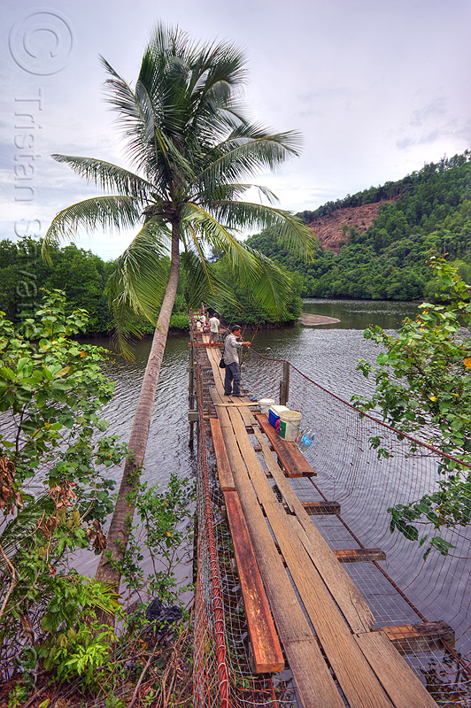 pedestrian bridge over a river, cococut palm, coconut tree, fishermen, forest, lumber, mangrove, men, people, rain forest, rusted, rusty, suspension bridge, water, wooden