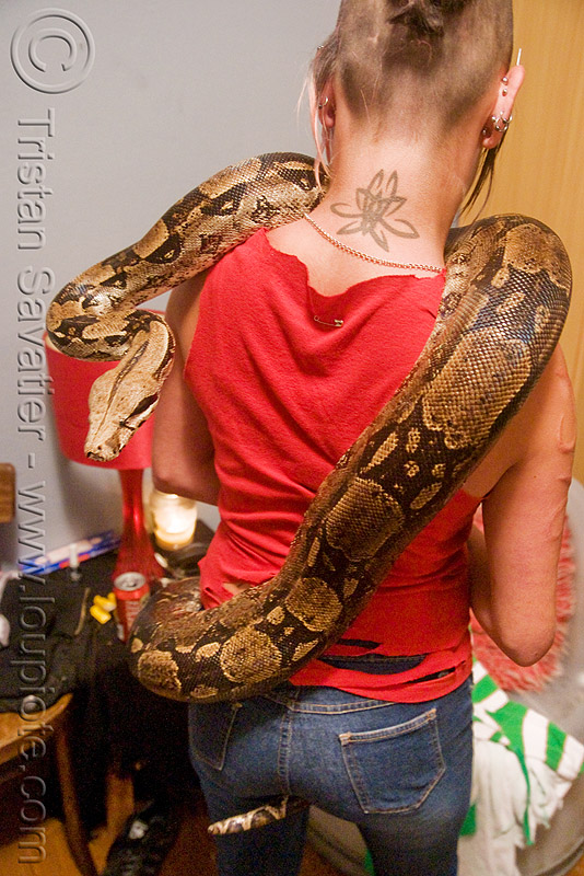 pet boa snake - melody and moa the boa, boa constrictor, melody, pet snake, reptile, woman