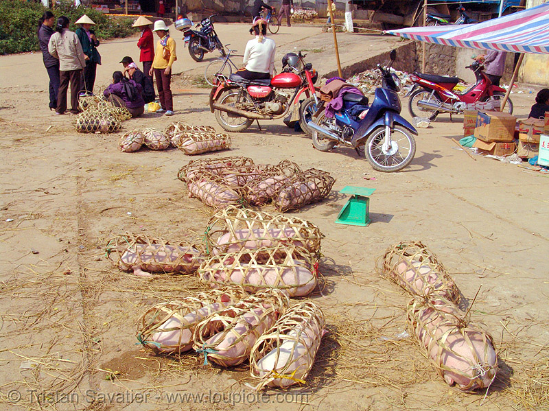 piglets on the market - vietnam, bamboo cages, neutering, piglets, pigs, pink, small, surgery