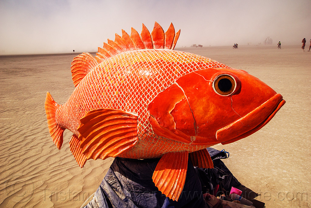 playa fish - burning man 2016, art installation, burning man, octavius, orange fish, sculpture