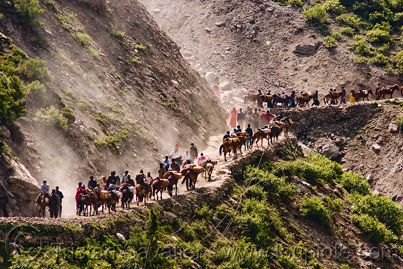 ponies and pilgrims on the trail - amarnath yatra (pilgrimage) - kashmir, amarnath yatra, caravan, crowd, horse-riding, horseback riding, horses, kashmir, kashmiris, mountain trail, mountains, pilgrimage, pilgrims, ponies, switch-backs, trekking, yatris, अमरनाथ गुफा