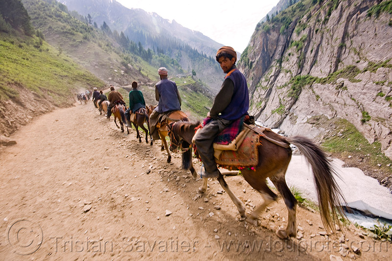 ponies and pilgrims on the trail - amarnath yatra (pilgrimage) - kashmir, amarnath cave, horse-riding, horses, many, mountain trail, mountains, trekking, yatris, अमरनाथ गुफा, stock photo