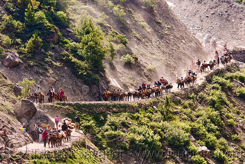 ponies and pilgrims on the trail - amarnath yatra (pilgrimage) - kashmir, amarnath yatra, caravan, crowd, hiking, hindu pilgrimage, horse riding, horseback riding, horses, india, kashmir, kashmiris, mountain trail, mountains, pilgrims, ponies, trekking