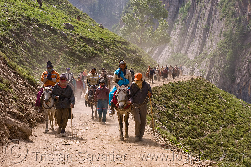 ponies and pilgrims on the trail - yatra - pilgrimage to amarnath cave - kashmir, amarnath yatra, crowd, horse riding, horseback riding, horses, kashmiris, mountain trail, mountains, people, trekking, yatris, अमरनाथ गुफा