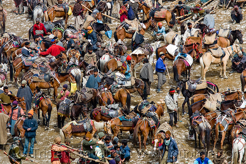 ponies and porters - amarnath yatra (pilgrimage) - kashmir, crowd, horses, kashmiris, people, pilgrims, pony station, trekking, yatris, अमरनाथ गुफा
