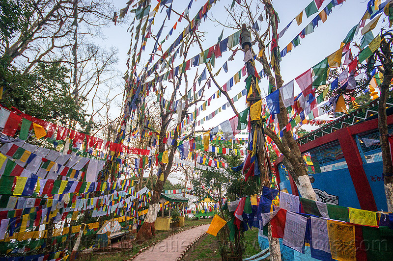 prayer flags - observatory hill - darjeeling (india), buddhism, darjeeling, hindu temple, hinduism, india, observatory hill, prayer flags, tibetan, trees