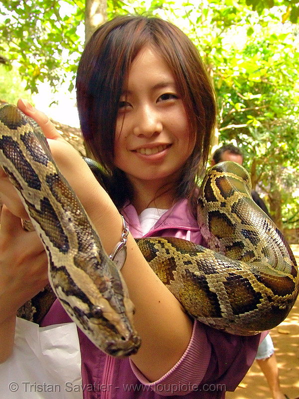 python snake pet, chiharu, head, japanese, pet snake, python snake, woman