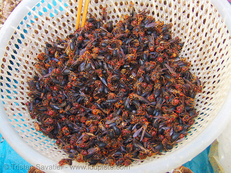 red and black wasps in basket - vietnam, cao bang, cao bằng, eating bugs, eating insects, edible bugs, edible insects, entomophagy, food, market, plastic basket