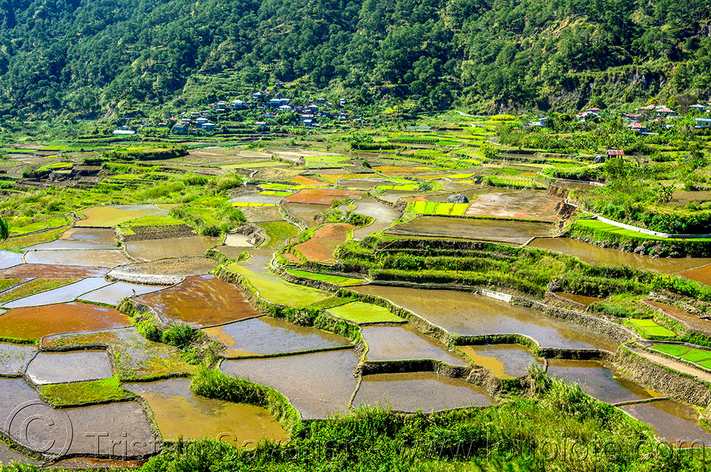 rice terraces - sagada (philippines), agriculture, philippines, rice fields, rice paddy fields, sagada, terrace farming, terrace fields, valley