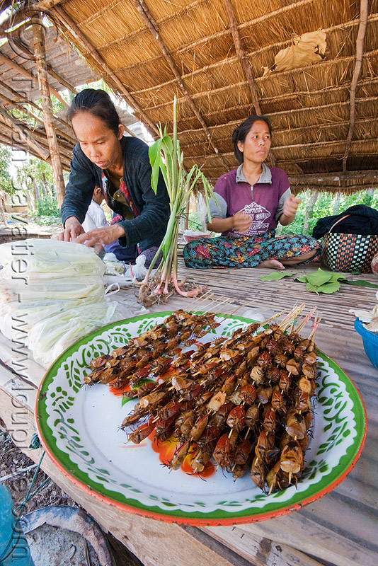 roasted insects as food - have you tried eating bugs? they are delicious! (laos), eating insects, edible bugs, edible insects, entomophagy, hemiptera, heteroptera, people, tessaratomidae, true bugs