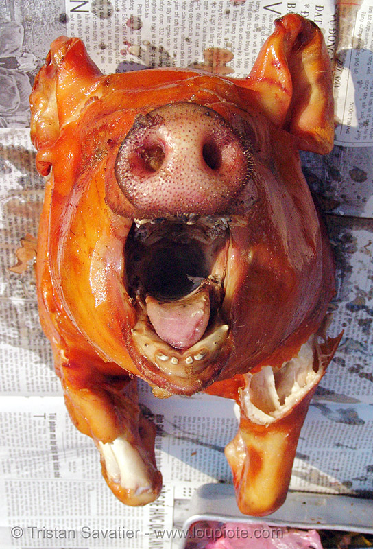 roasted piglet snout - vietnam, cooked, food, lang sơn, meat, mouth, nose, pig, pig head, pig nose, pig snout, pork, roasted pig, tongue