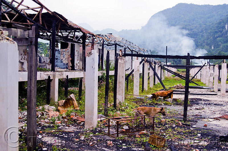 ruins of batu bungan longhouse, batu bungan penan, borneo, burned down, columns, concrete, debris, destroyed, destruction, dog, gunung mulu national park, houses, longhouse, malaysia, pillars, ruins, village