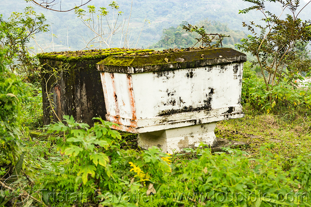 sarcophagus in the jungle (philippines), cordillera, grave, philippines, sarcophagus, tomb