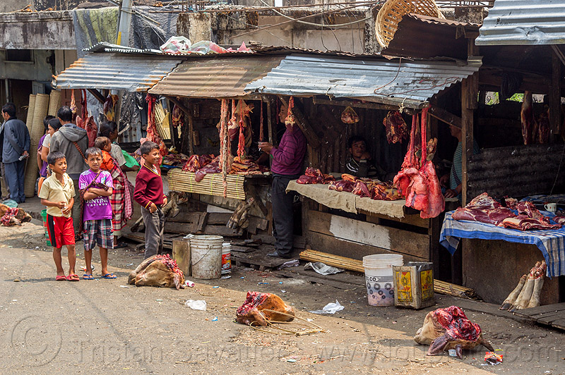 severed cow heads at meat market (india), beef lungs, children, cow heads, east khasi hills, india, kids, meat market, meat shop, meghalaya, pynursla, raw meat, severed head, street seller
