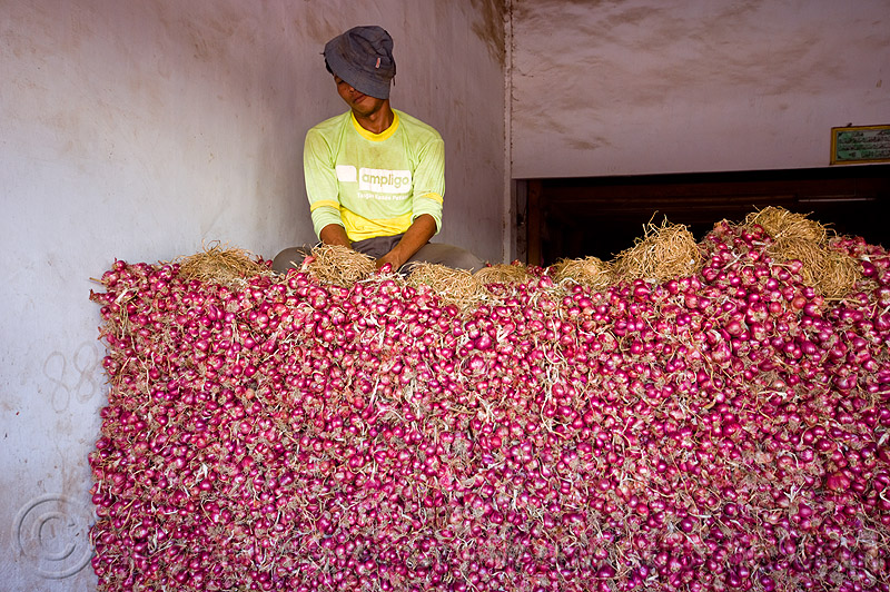 shallots - bulk market (java, indonesia), allium, allium cepa, foodstuff, heap, man, people, produce, produce market, sitting, vegetable, veggie, worker