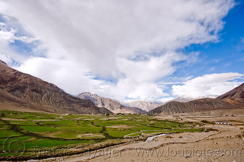 shyok valley - near nubra valley - ladakh (india), agriculture, dry stone walls, fields, mountains