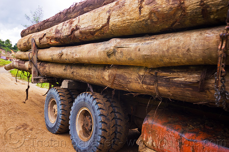 side view of logging truck, deforestation, environment, logging camp, road, tree logging, tree logs, tree trunks