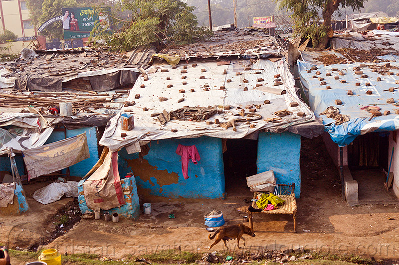 single story houses in village (india), bed, bitch, blue wall, female dog, roof, shanty houses, shanty town, sheeting, single story house, stones, stray dog, tarps, village