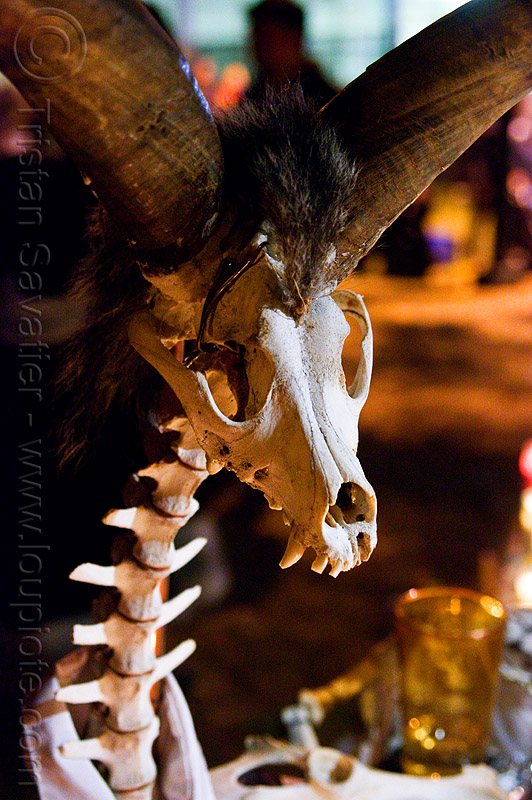 skeleton of mythical animal, day of the dead, dia de los muertos, dog skull, halloween, night, ram horns, spine