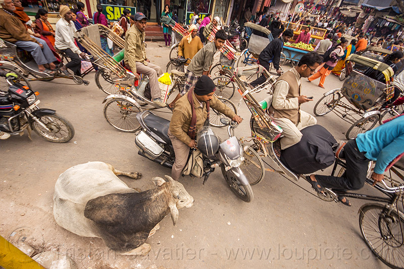 sleepy bull oblivious to street traffic (india), bicycles, bikes, bull, cycle rickshaws, lying down, motorbikes, motorcycles, moving, resting, street cow, traffic jam, varanasi
