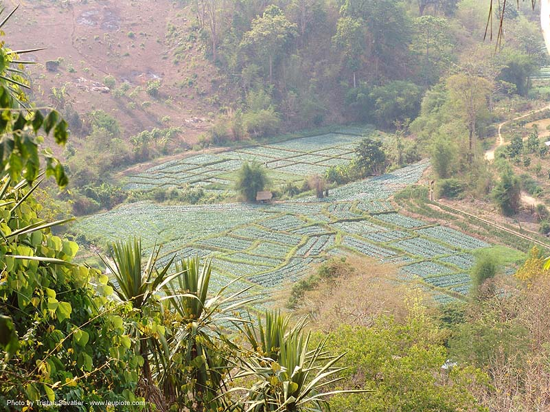 small fields in valley - ban mueang na - thailand, agriculture, ban mueang na, farming, fields, thailand