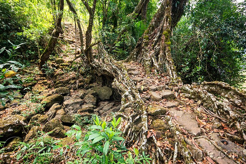 small living root bridge - mawlynnong (india), banyan, east khasi hills, ficus elastica, footbridge, jungle, living root bridge, mawlynnong, meghalaya, rain forest, rocks, roots, stones, strangler fig, trail, trees