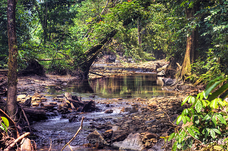 small river in the jungle, gunung mulu national park, jungle, melinau river, rain forest, sungai melinau, water