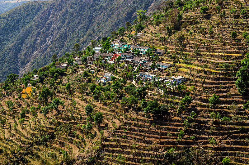 small village and terrace fields in himalayas (india), agriculture, farming, mountains, terrace farming, valley