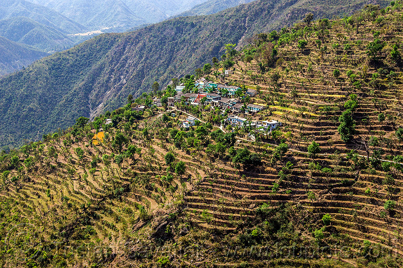 small village and terrace fields in indian himalayas, agriculture, farming, mountains, terrace farming, valley