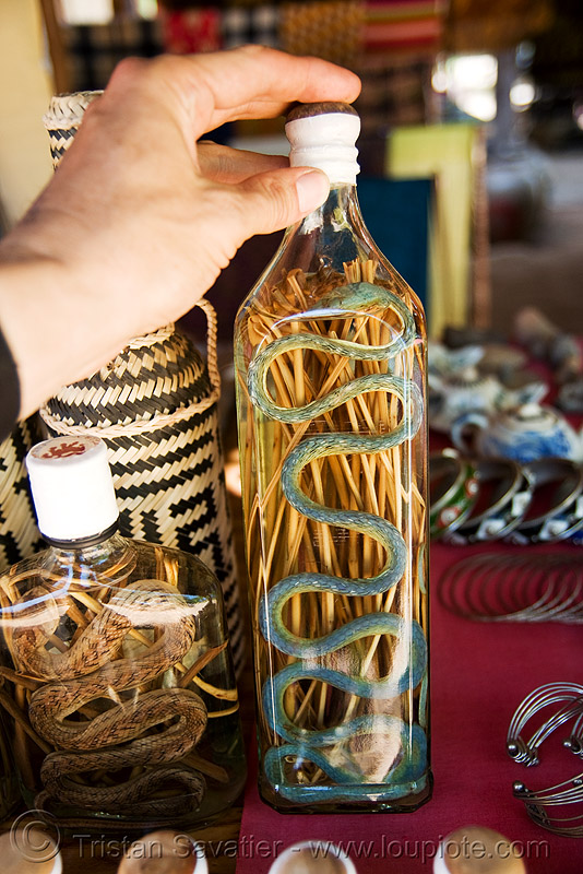 snake wine, ahaetulla prasina, alcohol, asian vine snake, beverage, bottles, lao whisky, lao-lao, liquor, luang prabang, pak ou, pak ou caves, pak ou caves temples, reptile, rice alcohol, rice whisky, rice wine, vodka, whisky village