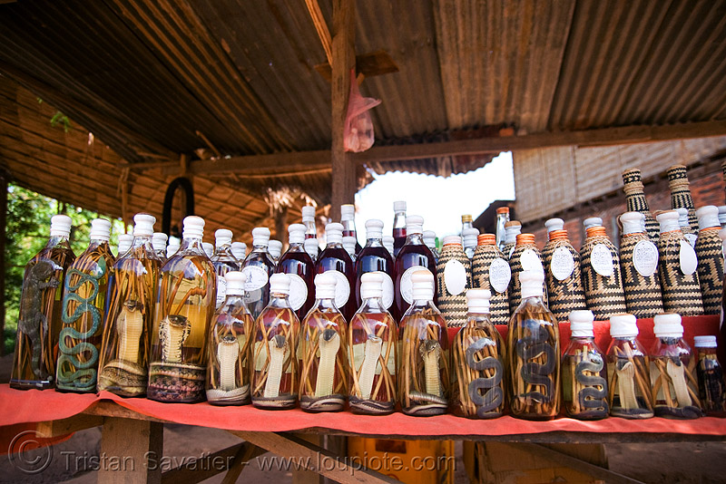 snake wine - snakes in lao-lao bottles (rice alcohol) - laos, beverage, bottles, lao whisky, lao-lao, liquor, luang prabang, pak ou caves temples, reptile, rice alcohol, rice whisky, rice wine, snakes, vodka, whisky village