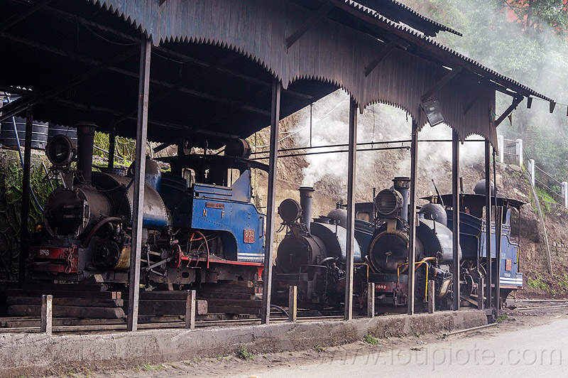 steam locomotives - darjeeling railroad yard (india), 782 mountaineer, 788 tusker, 804 queen of the hills, darjeeling himalayan railway, darjeeling toy train, india, narrow gauge, railroad, smoke, smoking, steam engine, steam locomotive, steam train engine, train depot, train yard