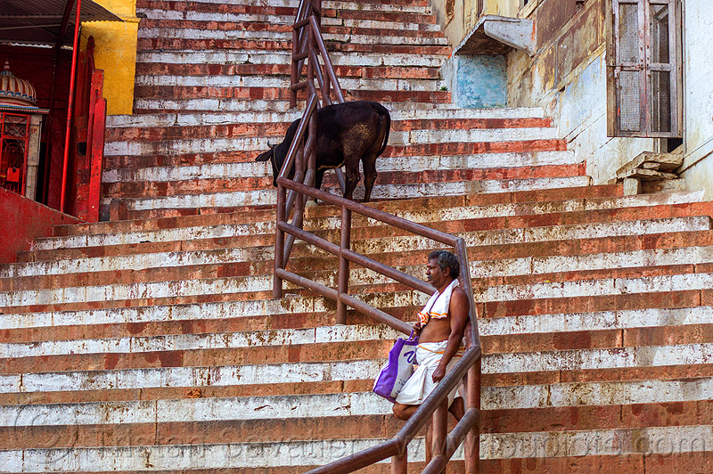 steep street with stairs in varanasi (india), cow, man, people, steps, street cow