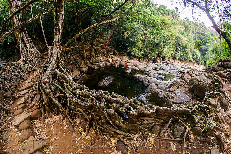 stone trail on living root bridge - mawlynnong (india), banyan, east khasi hills, ficus, ficus elastica, footbridge, jingmaham, jungle, meghalaya, rain forest, river, river bed, rocks, roots, stones, strangler fig, trees, wahthyllong, water